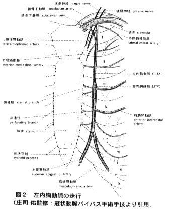内胸動脈の描出